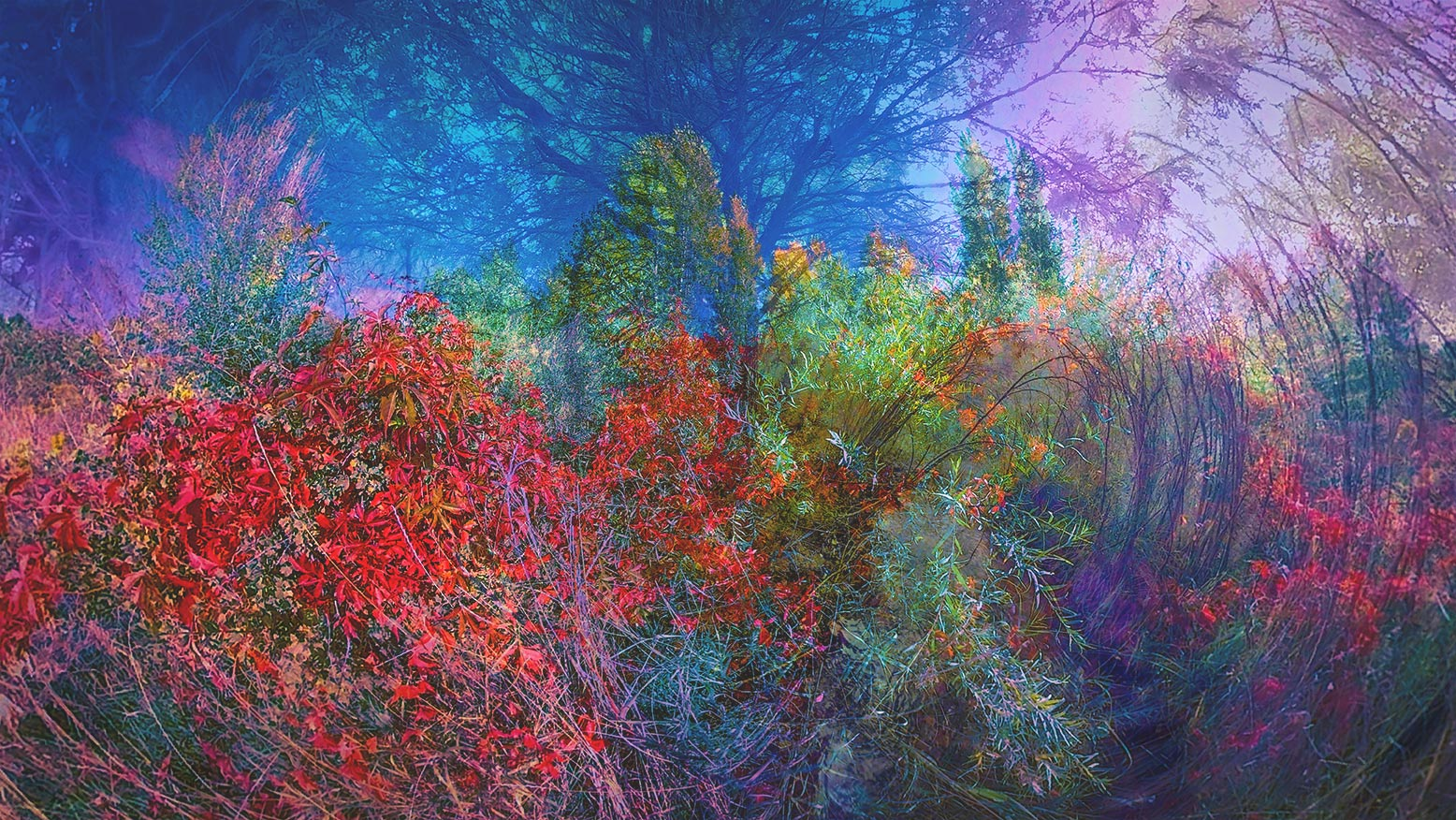 IMMERSIVE HORIZONS SERIES_MONET F#