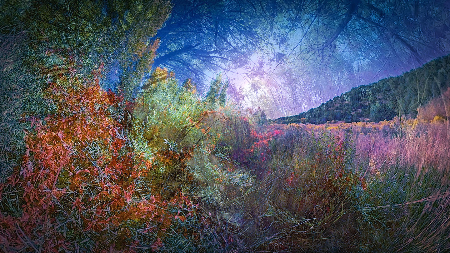 IMMERSIVE HORIZONS SERIES_MONET B#