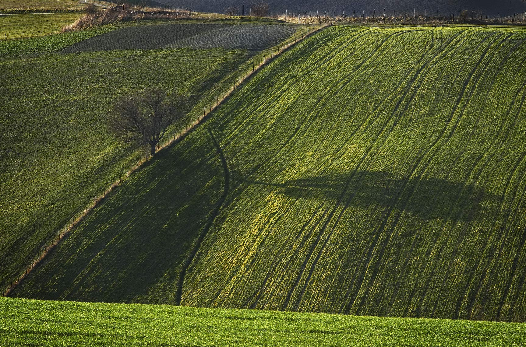 ONE TREE SHADOW ITALIA