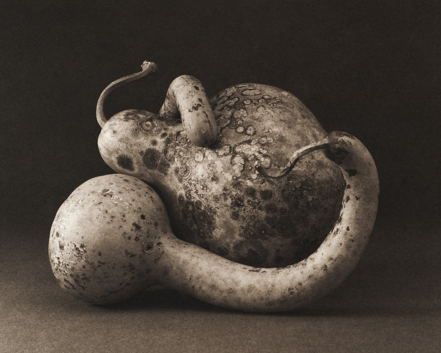davidhoptman-photo-platinum-palladium-pp_gourdlove copy.jpg